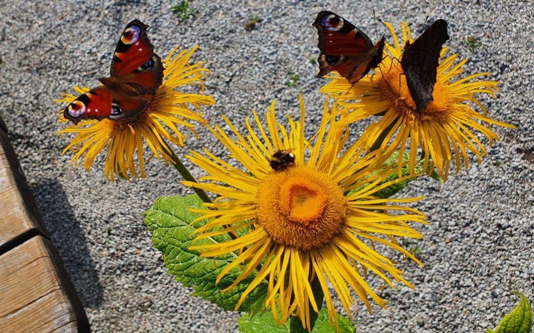 Diversity – Warum Pflanzenvielfalt so wichtig für die Bienenvielfalt ist.
