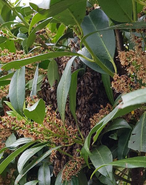 Bienenschwarm gefunden?