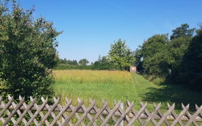 Summen über dem Brummen – Lehrbienenstand über der A96