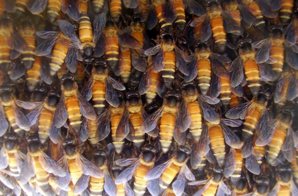 Feinstaub belastet auch Bienen