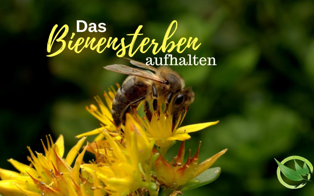 So wird Dein Garten zum Bienenparadies